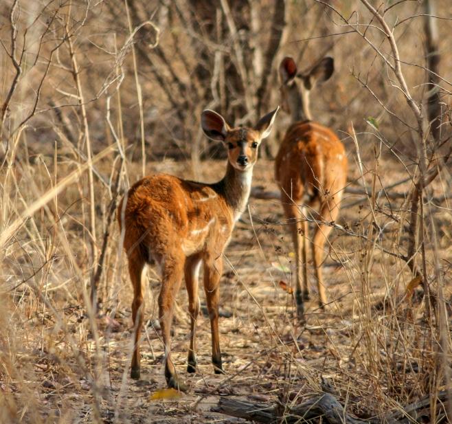 Yankari game reserve, Gombe, Nigeria